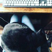 cat lap reading writing spot